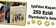 Işid'den Kaçan 250 Ezidi Diyarbakir'a...