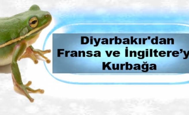 Diyarbakır'dan Fransa ve İngiltereye Kurbağa