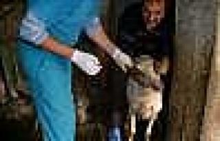 Kocaköy'de Hayvan Aşılamaları Yapıldı