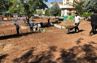 Üniversite kampüsüne 2 Bin adet ağaç dikildi